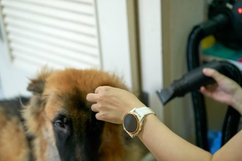 Principales técnicas en peluquería canina