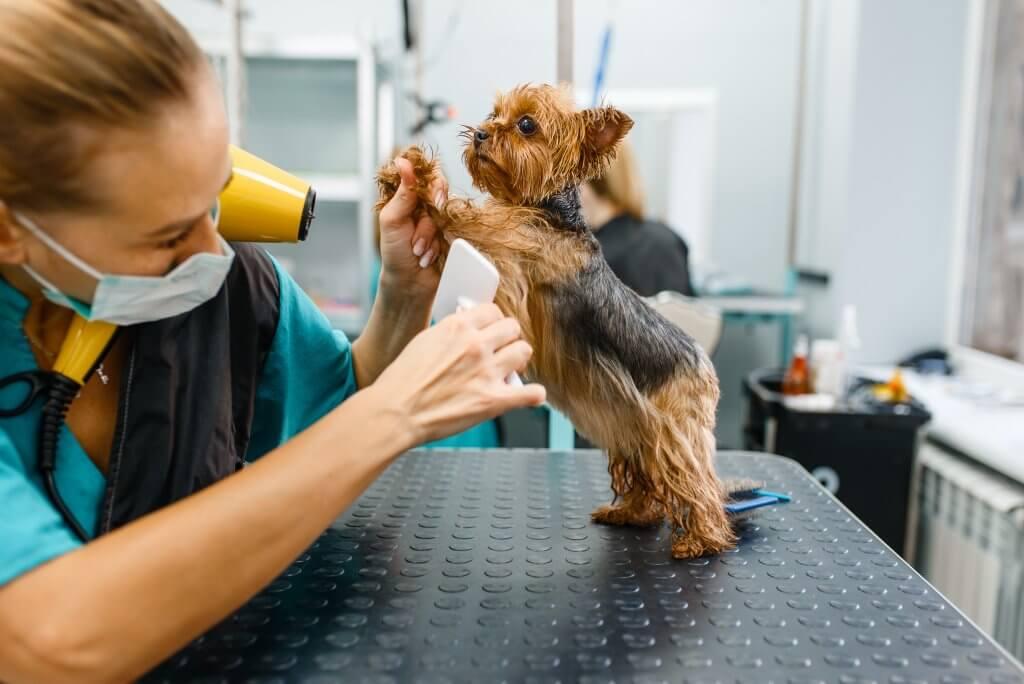 ¿Qué incluye la peluquería canina?